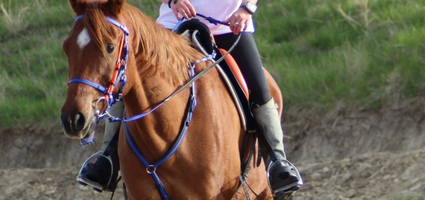 Patru călăreți participă la finala de Anduranță